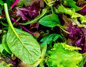 Salad Mix Leaves Background. Fresh Salad Pattern With Rucola, Purple  Lettuce, Spinach, Frisee And   poster