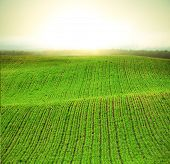 image of potato-field  - morning at spring field - JPG