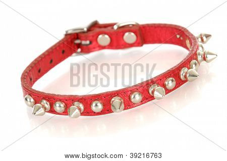 dog collar - red studded dog collar isolated on white background