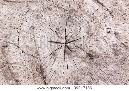 Cut Old Wood Texture Surface
