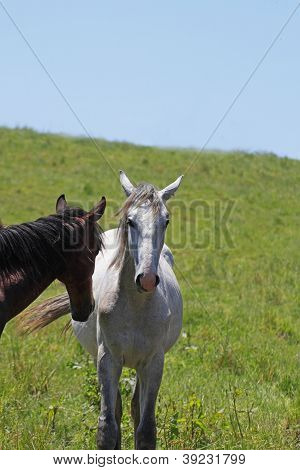 Horse And Field