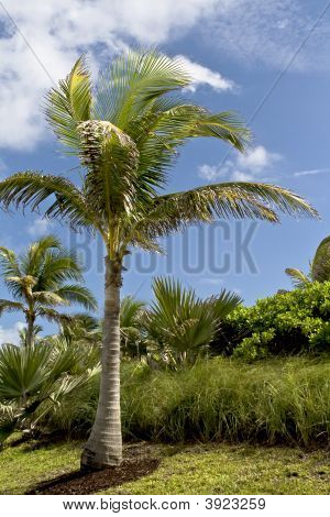 Palm Trees And Vegetation In The Tropics