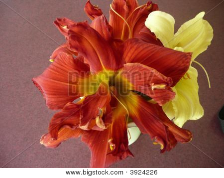 Burnt Orange & Yellow Daylilies