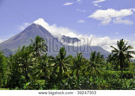 Rows of Coconut Trees and Active Volcano