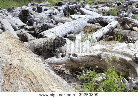 Lots Of Driftwood