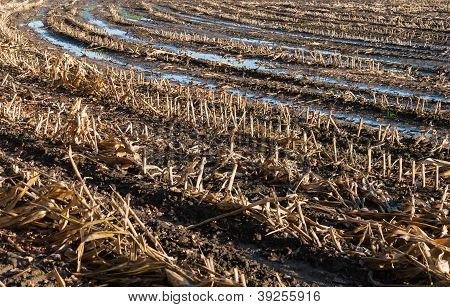 Closeup Of A Wet Stubble Field In Autumn
