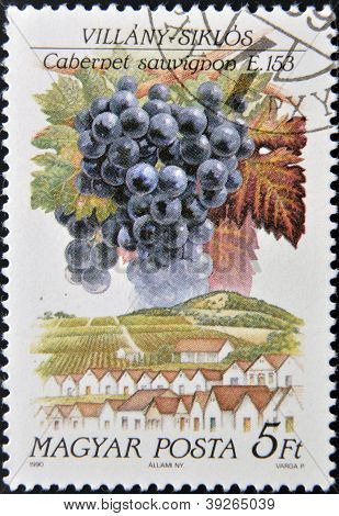 HUNGARY - CIRCA 1990: A stamp printed in Hungary shows fruit grape Cabernet sauvignon circa 1990