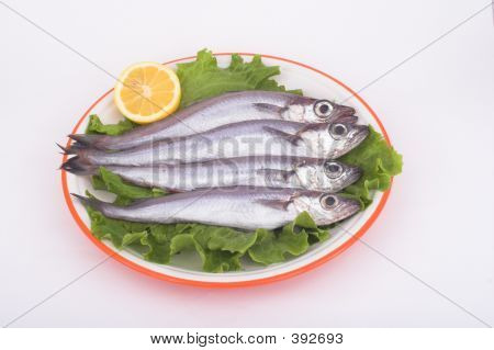 Blue Whiting ( Fish )