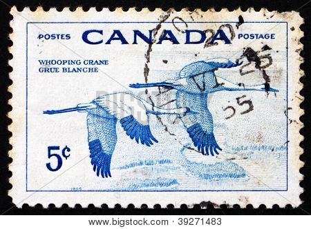 Postage stamp Canada 1955 Whooping Cranes, Birds