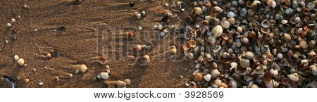 The Colored Shells On  Beach