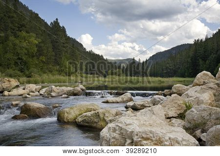 Trout Stream In The Black Hills Of South Dakota