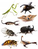 stock photo of exoskeleton  - insects and scorpions in front of white background - JPG