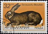 BULGARIA - CIRCA 1986: A stamp printed in Bulgaria shows Flemish Giant - Flanders circa 1986