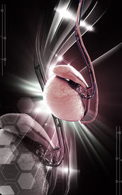 image of testicle  - Digital illustration of  testicles in colour  background - JPG