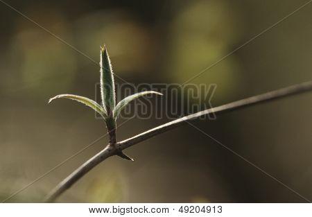 Close-up of bud on twig