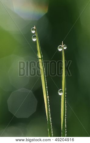 Dew droplets on grass blades close up