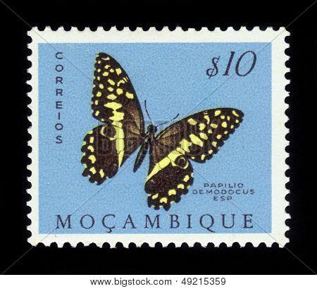 Butterfly Papilio Demodocus, Citrus Swallowtail