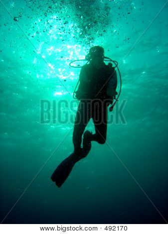 Hanging Diver