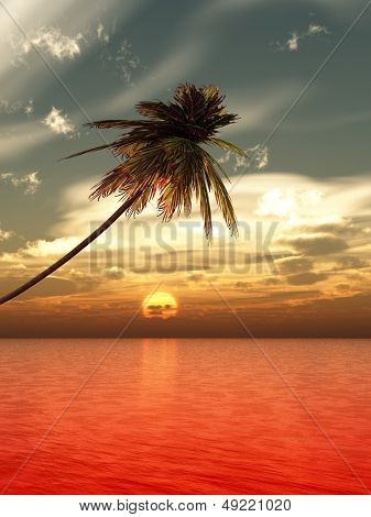 Palms tree at sunset sea