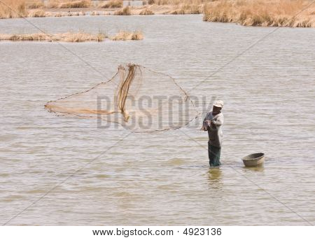 Wetland Fisherman In The Gambia