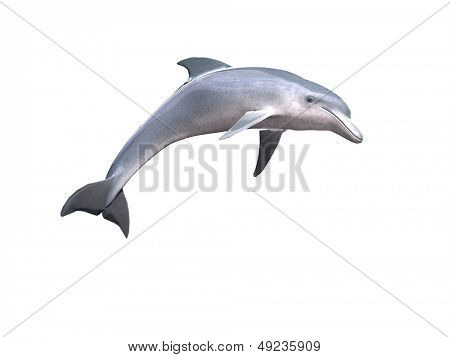 HI res Dolphin isolated on a white background