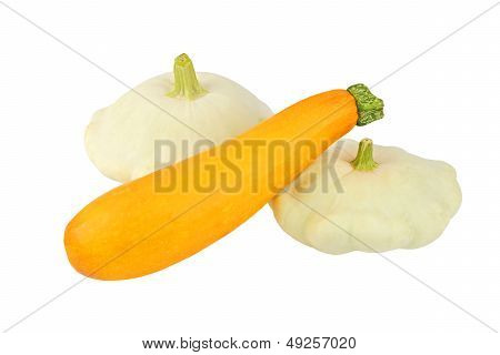 Scalloped custard and marrow squash (Cucurbita pepo var. patisson)