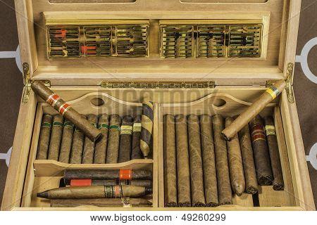 Large Cigar Humido