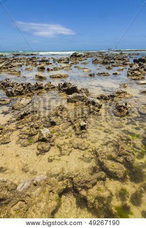 Reef On A Brazilian Beach