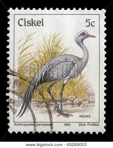 CISKEI - CIRCA 1981: A stamp series printed in Ciskei shows Blue Crane (Anthropoides paradiseus), circa 1981
