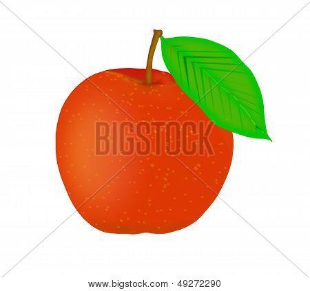 Ripe orange peach.