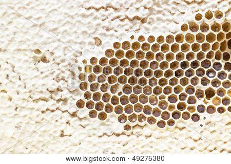Yellow honeycomb full of honey