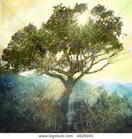 Árvore e sol