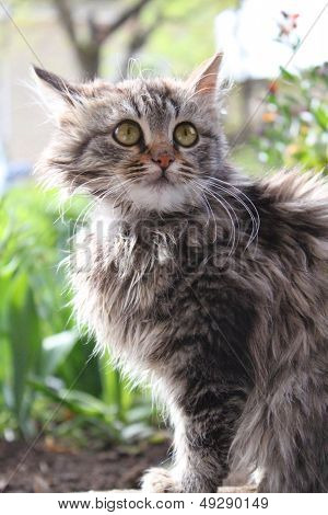 Cute fluffy kitten in the garden. Animal, mammal, domestic cat.
