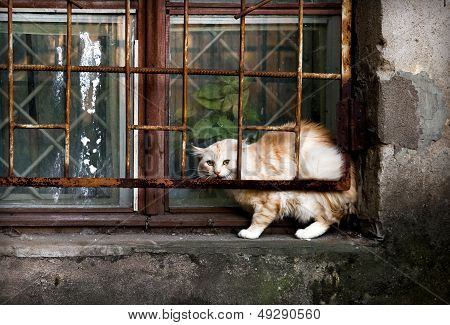 Street Cat On The Windowsill