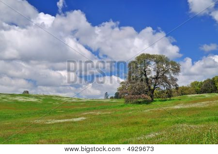 Field In Springtime