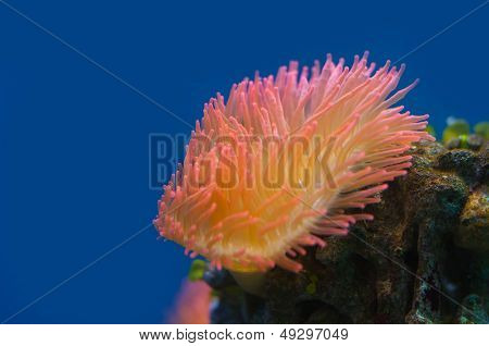 Colorful Coral Reef Background