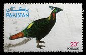 PAKISTAN - CIRCA 1979: stamp printed by Pakistan shows Kalij Pheasant , circa 1979
