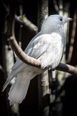 image of queer  - White albino crow sits on tree in the forest - JPG