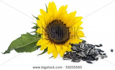 Sunflower With Seeds On White