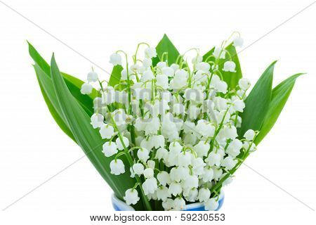 lilly of the valley  blooming posy