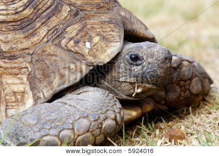 Cerca de una tortuga