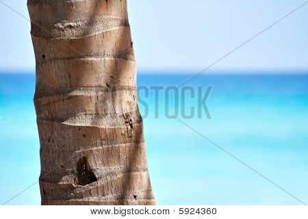 Palm Trunk And A Beautiful Beach