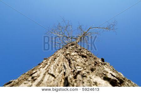 of tree against winter sky