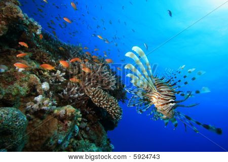 Lionfish and Coral Reef