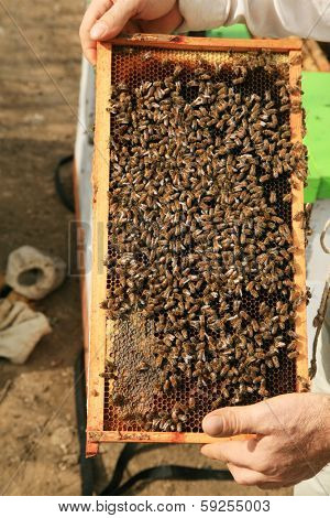 Amazing views of Real Honey Bees swarming on their Comb doing what bees do naturally.