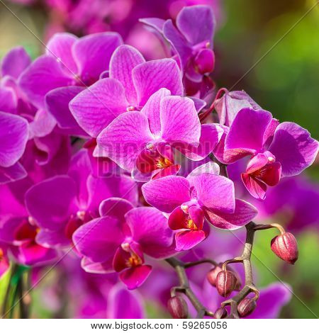 Beautiful purle orchid flowers closeup