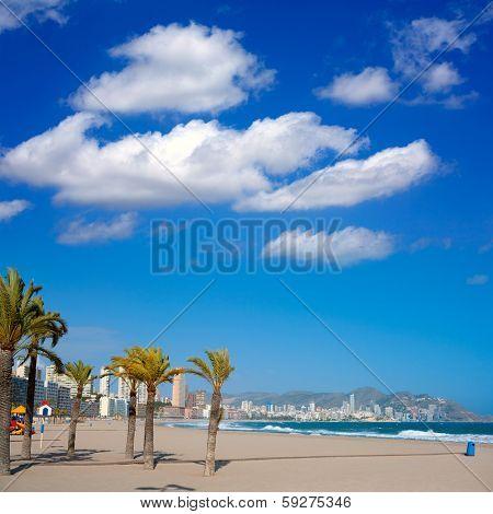 Benidorm Alicante beach palm trees and Mediterranean sea of Spain