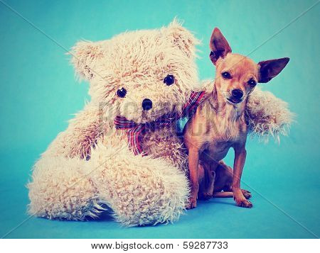 a teddy bear with his arm around a tiny chihuahua done with a vintage retro instagram filter