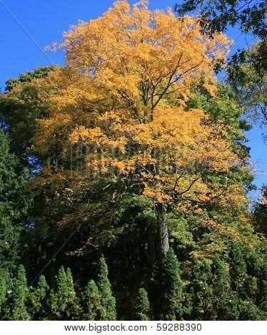 Brookline Autumn Foliage 4