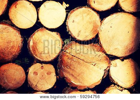 Raw de-barked pine wood logs in a lumber staging and storage yard